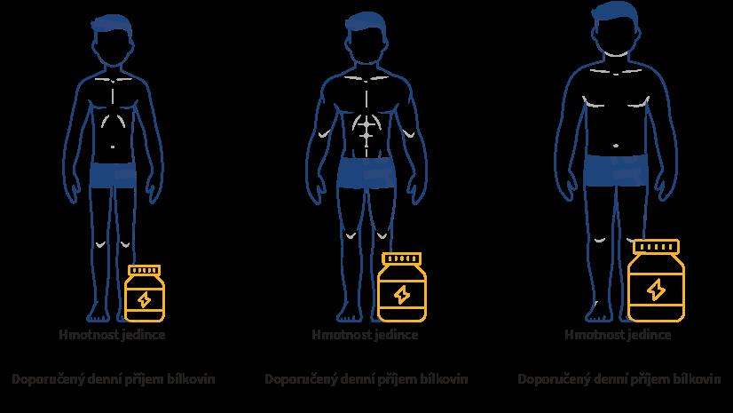 Dávkování bílkovin podle tělesné stavby jedince